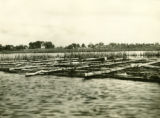 Belarus, raft of birch logs