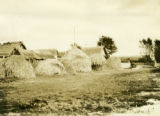 Belarus, row of haystacks at the edge of settlement