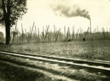 Poland, hop poles in field