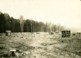 Poland, stacks of cut pine and birch wood