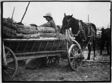 Belarus, wagon filled with logs at market