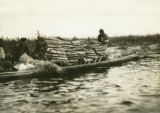 Belarus, canoe filled with birch logs