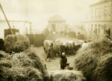 Belarus, hay area of market