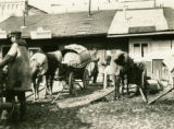Belarus, horse feeding  from wagon