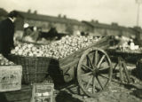 Poland, wagon and baskets filled with apples