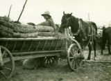 Belarus, market wagons filled with firewood