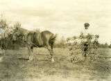 Ukraine, farmer standing with harrow and horse