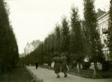 Ukraine, avenue  lined with trees