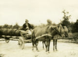 Ukraine, man sitting in cart with horses
