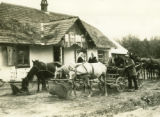 Ukraine, horses feeding at Inn