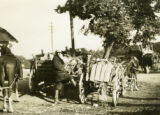 Ukraine, man standing with wagons of livestock