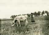 Ukraine, woman tethering cow in field