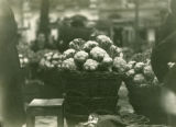Ukraine, close up of cauliflower in basket