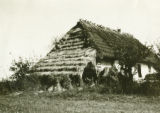 Poland, barn roof slopes down to form shed roof