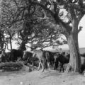 England, horses gathered under tree in Devon