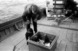 Canada, John Forman [Foreman] on fishing boat in Nova Scotia