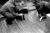 Canada, John Forman [Foreman] and dog watching fisherman cut fish in Nova Scotia