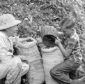 Puerto Rico, boy and man working on coffee plantation in Utuado