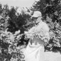 United States, man harvesting fruit tree in Phoenix