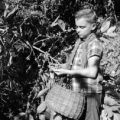 Puerto Rico, boy harvesting coffee beans on plantation in Utuado