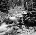United States, stream through forest at Yellowstone National Park in Park county