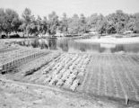 United States, vegetable garden along water in central Lake county