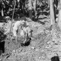 Guatemala, man examining soil at banana plantation