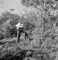 Mexico, man working at coffee plantation in Coatepec