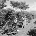 Costa Rica, women collecting coffee beans in field