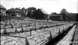United States, cod fish drying operation at Gloucester Harbor
