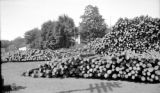 United States, piles of log near Champion Copper Company office in Painesdale