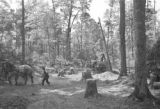 United States, workers at C.M. Christiansen Company logging camp near Nelma