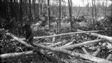 United States, man stripping logs in Michigan