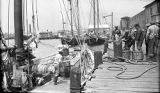 United States, fishermen unloading catch in Pensacola