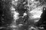 Panama, guide on horseback crossing stream