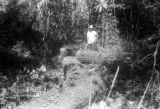 Panama, man standing near felled tree