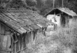 Guatemala, woman standing between two huts