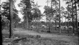 United States, new houses and tapped turpentine trees in Florida