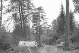 United States, cut logs stacked at logging camp in Vilas County