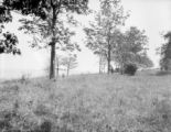 United States, a man by a tree in a meadow