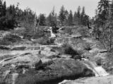 Western United States, stream in the forest