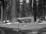 Western United States, log cabin in the forest