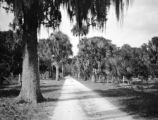 Florida, palm trees along narrow drive