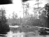 Florida, horse drawn cart driving through water