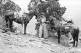 North America, woman with two horses on hillside