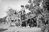 North America, gathered wood in horse drawn cart