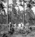 Waycross (Georgia), men examine land and collect soil samples