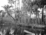 Tarpon Springs (Florida), bank of Anclote river