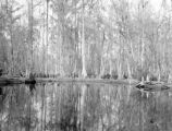 Jefferson County (Florida), source of Saint Marks river near town of Lloyd