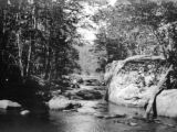 Maine, shaded rocky stream